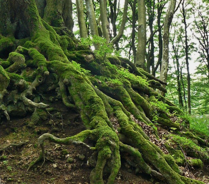 L'incredibile valore degli alberi