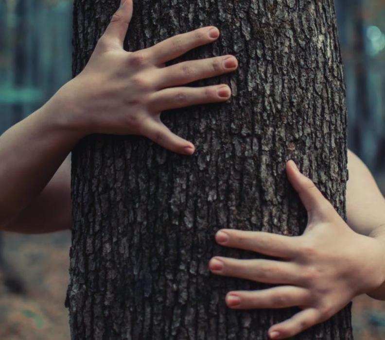 Abbracciare gli alberi: cos'è la silvoterapia?