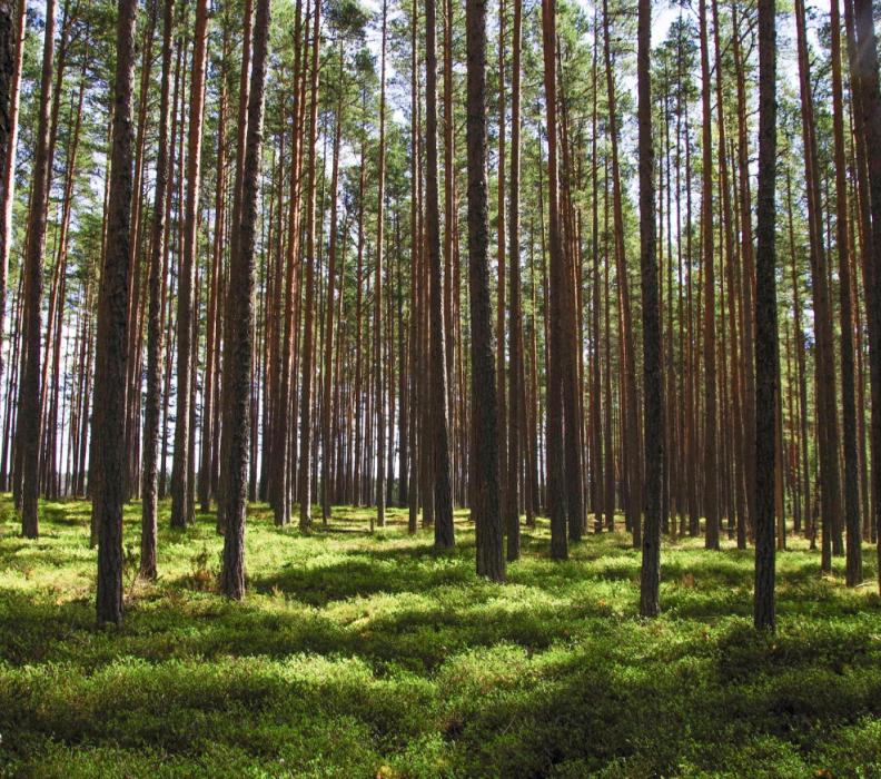 Quanti alberi dovremmo piantare per salvare il pianeta?