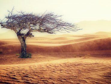 albero-nel-deserto