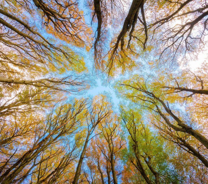 E' arrivato l'autunno……camminiamo tra i boschi